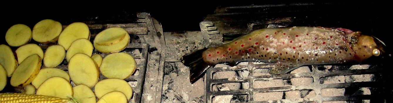Bækørred på hibachi grill
